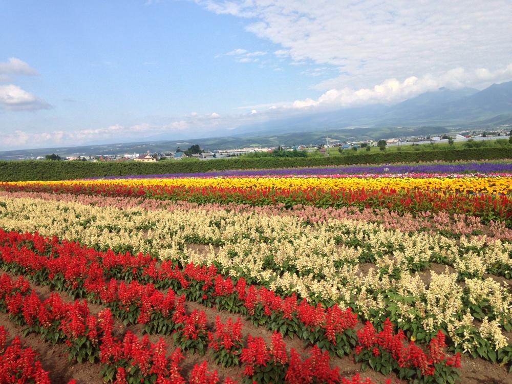 Furano Flowers