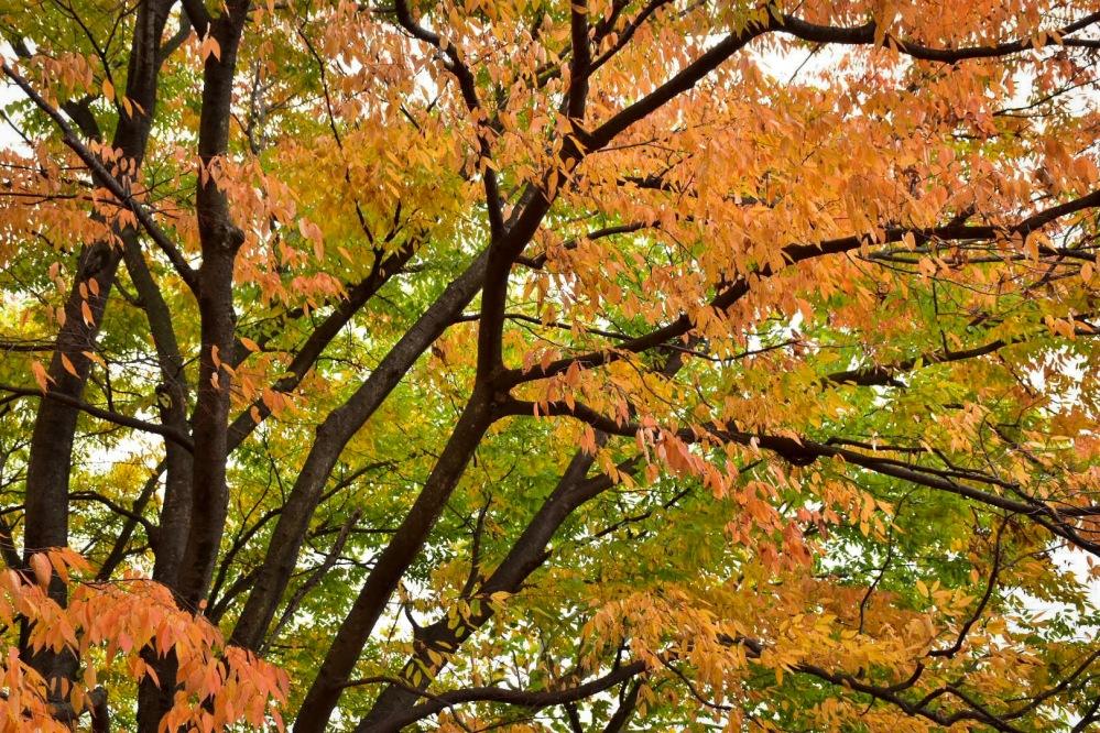 Gyeongju Autumn Colours